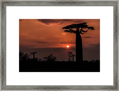 Baobab Sunrise Framed Print