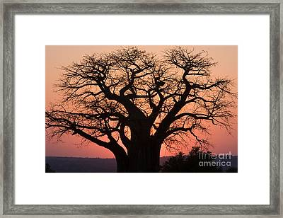 Framed Print featuring the photograph Baobab Tree Sunset by Chris Scroggins