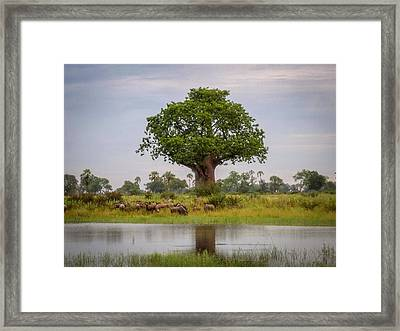 Baobao Tree Framed Print