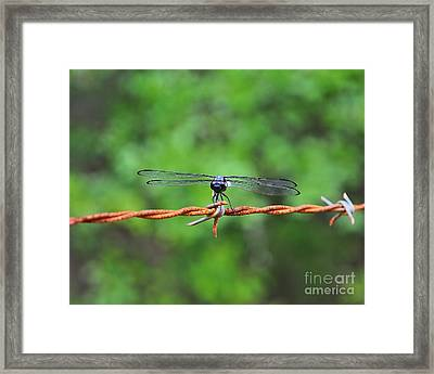 Bar Winged On Barbed Wire Framed Print by Al Powell Photography USA