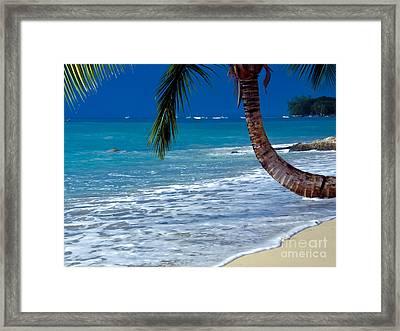 Barbados Beauty Framed Print by Sophie Vigneault