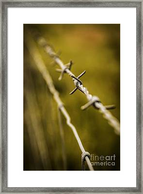 Barbed Wire Framed Print by Carlos Caetano