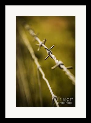 Barbed Freedom Framed Prints