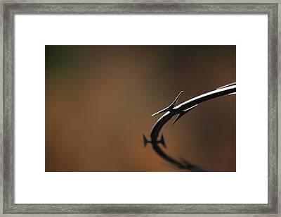 Barbed Framed Print by Karol Livote