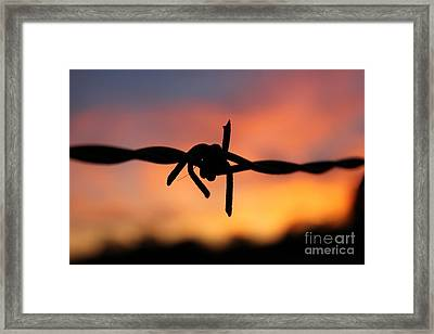 Framed Print featuring the photograph Barbed Silhouette by Vicki Spindler