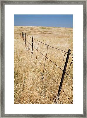 Barbed Wire Fence Framed Print by Jim West