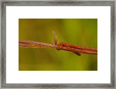 Barbed Wire Framed Print by Jeff Swan