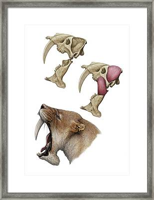 Barbourofelis Sabre-toothed Cat Framed Print by Mauricio Anton