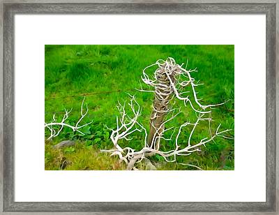 Barbs And Briers Framed Print