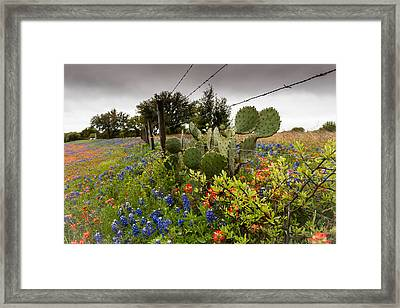 Barbs Needles And Flowers Framed Print