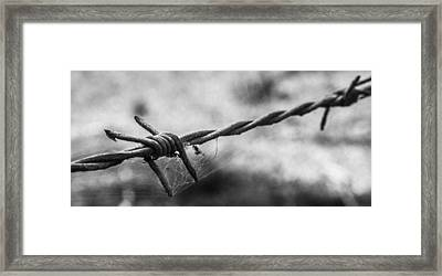 Barbwire And Spider's Web Black And White Framed Print by Kaleidoscopik Photography