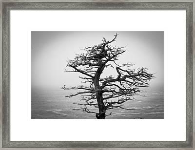 Bare Cypress Framed Print by Melinda Ledsome