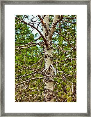 Bare Essentials Framed Print by Omaste Witkowski