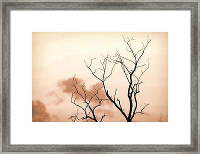 Framed Print featuring the photograph Bare Limbs by Denise Romano