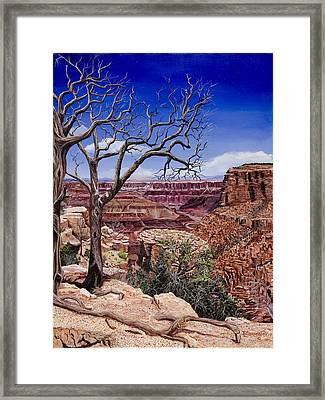 Bare Limbs Framed Print by Timithy L Gordon