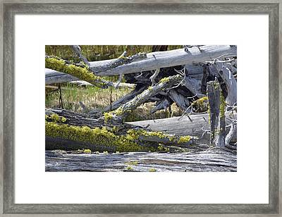 Bare Logs And Lichen In Yellowstone Framed Print by Bruce Gourley