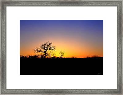 Bare Oak In Spring Sunset Framed Print