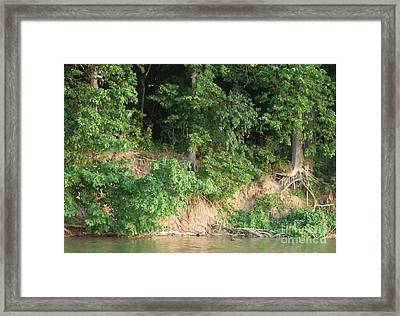 Bare Roots Framed Print by Deborah DeLaBarre