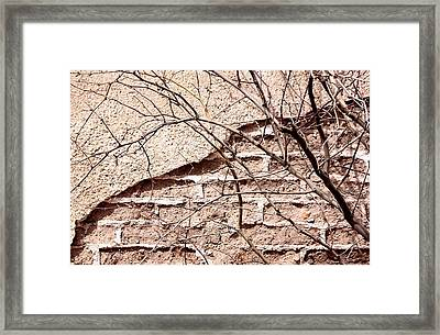 Bare Tree Adobe Wall Framed Print by Joe Kozlowski