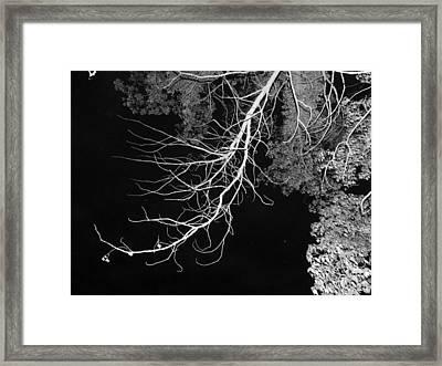 Bare Tree Branch Framed Print