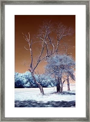 Bare Tree Cahokia Framed Print by Bob Pomeroy