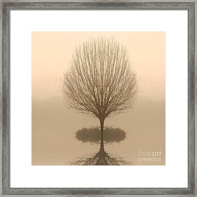 Bare Tree In Fog At Dawn Framed Print by Cheryl Casey