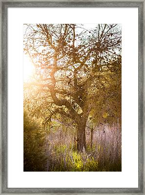 Bare Tree Framed Print by Mike Lee
