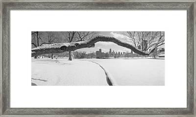 Bare Trees In A Park, Lincoln Park Framed Print