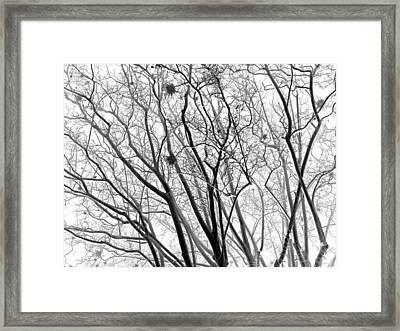 Bare Framed Print