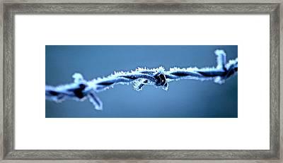 Bared Wire Framed Print by Karen Grist
