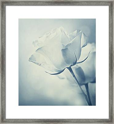 Barely There Rose Framed Print by Georgiana Romanovna