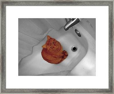 Bari The Cat Framed Print by Andrea Galiffi