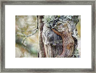 Bark And Bokeh Framed Print by Chris Anderson