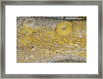 Bark Art Framed Print
