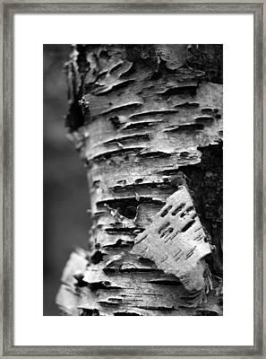 Bark Framed Print by Brady D Hebert