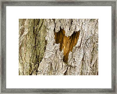 Bark Heart Framed Print by Deborah Johnson