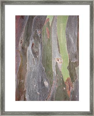 Framed Print featuring the photograph Bark Of Tree, San Juan by Jean Marie Maggi