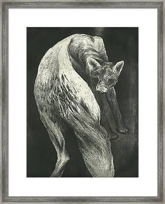 Bark Framed Print by Rebecca Bourke