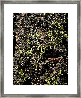 Bark Framed Print by Rebecca Christine Cardenas