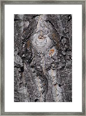 Bark Framed Print