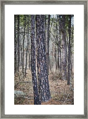 Framed Print featuring the photograph Bark by Yvonne Emerson AKA RavenSoul