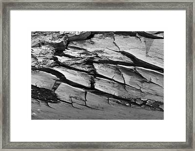 Barked Framed Print