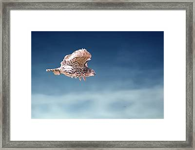 Barking Owl In Flight Framed Print
