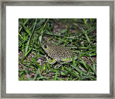 Barking Tree Frog Framed Print by Al Powell Photography USA