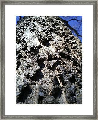 Barking Up A Tree Framed Print by Jaime Neo