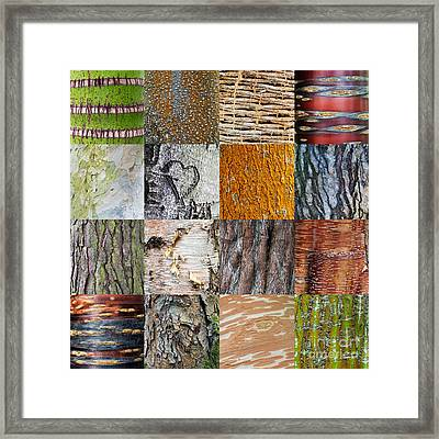 Barking Up The Right Tree Framed Print by Tim Gainey