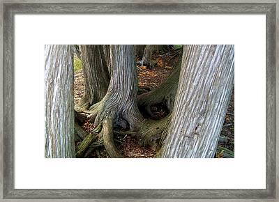 Barky Barky Trees Framed Print by Michelle Calkins