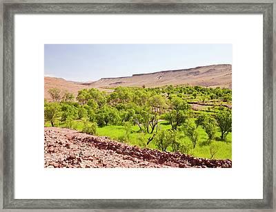 Barley Fields Framed Print by Ashley Cooper