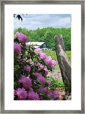 Barn And Blossoms Framed Print by Gayle Melges