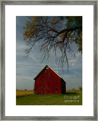 Barn And Box Elder Framed Print by Tim Good